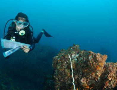 Valhajar dykning och marin forskning