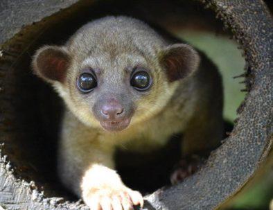 Djurräddningscenter i Amazonas regnskog