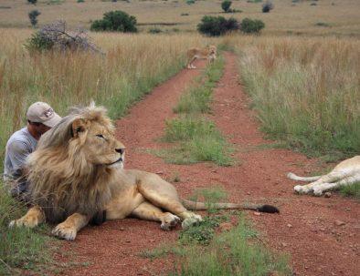 Kevin Richardsons vilddjursreservat för lejon