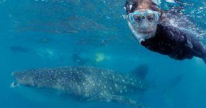 Valhajar, dykning och marin forskning