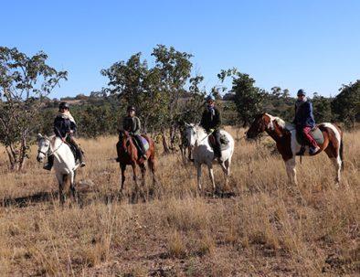 Djurbevarande och anti-tjuvjaktsarbete från hästryggen