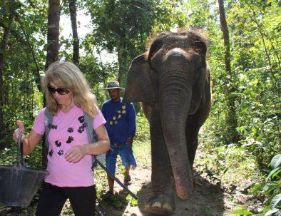 Rehabilitering för asiatiska elefanter i underbara Thailand