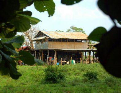 RäddHavssköldpaddor i vackra Costa Ricanings- och bevaradearbete med havssköldpaddor