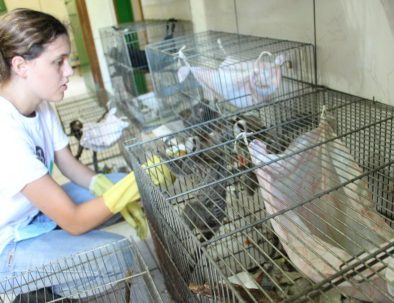 Djurräddningscenter i Florianópolis för vilda djur i Brasilien