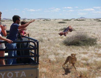 Forskningsarbete med vilda djur