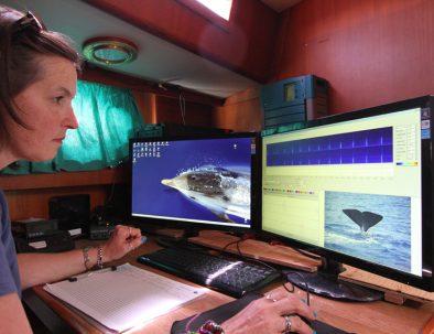 Delfin-och valexpedition med marin forskning i Sanremo i Italien