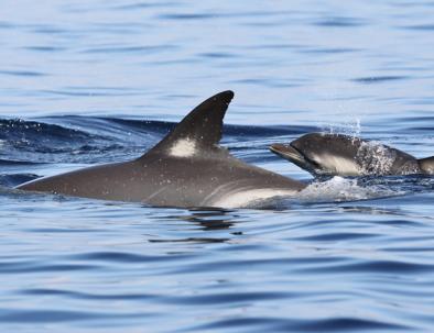 Delfinexpedition och marin forskning i Medelhavet