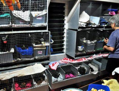 Rehabiliteringscenter för skadade och föräldralösa fladdermöss