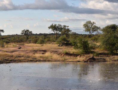 Djurbevarande ute i bushen på Big 5-reservat