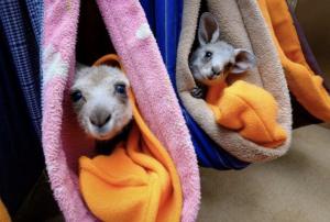 Räddningscenter för skadade och föräldralösa djur