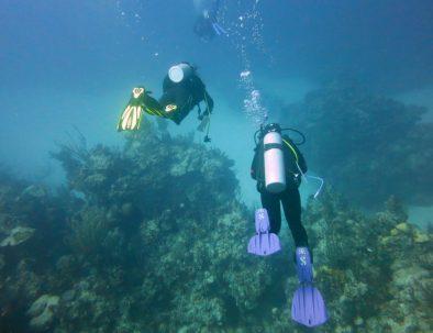 Dykäventyr och marin forskning på Stora Barriärrevet