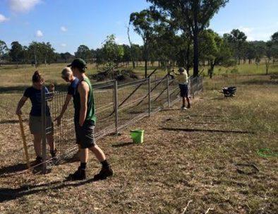 Räddningscenter för vallaby Räddningscenter för vallaby känguru, vombat och andra inhemska djur, vombat och andra inhemska djur