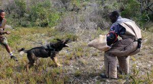 Hundcenter i kampen mot tjuvjakt